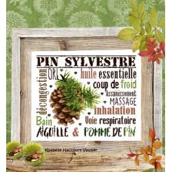 Aiguille & Pomme de pin - Isabelle Haccourt Vautier