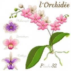 L'orchidée - Passion Bonheur