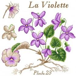 La violette - Passion Bonheur