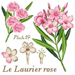 Le laurier rose - Passion Bonheur